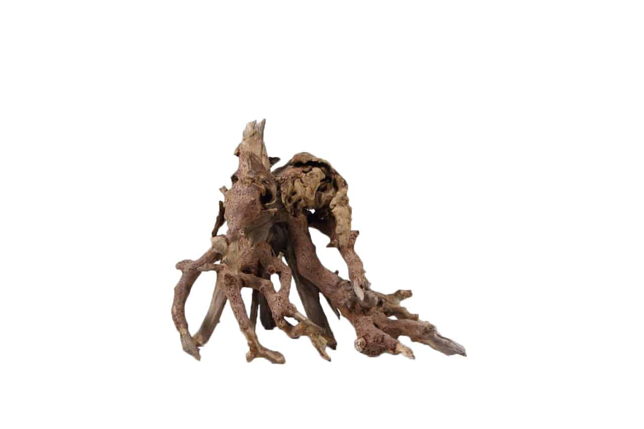 Octopus-Holz